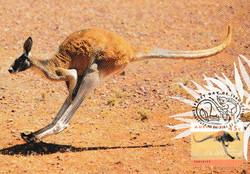 Single-kangaroo