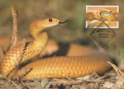 Eastern-brown-snake