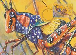 Leichhardts-grasshopper