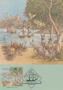 kangaroo-gaze