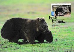 Coomon wombat Vombatus ursinus