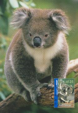Koala 2006