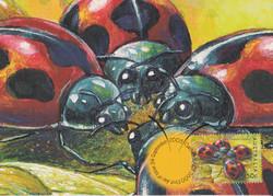 vedalia-ladybird