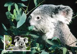 Koala-wildlife-recovery