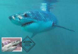 White-shark