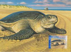flatback-turtle