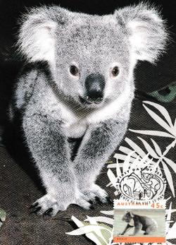 Koala-cute