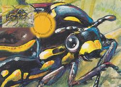 fiddler-beetle