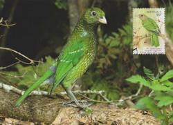 green-catbird