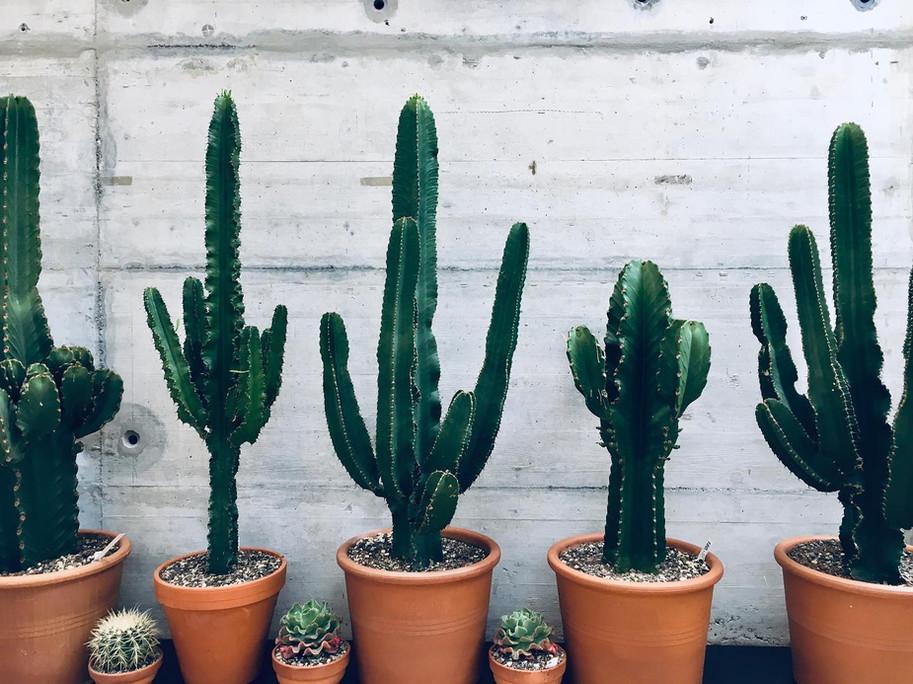 Kaktus & Sukkulenten