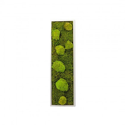 Cadre Végétal Stabilisé - Panoramic (70 x 20 cm)