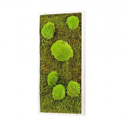 Cadre Végétal Stabilisé - Rectangle (60 x 30 cm)