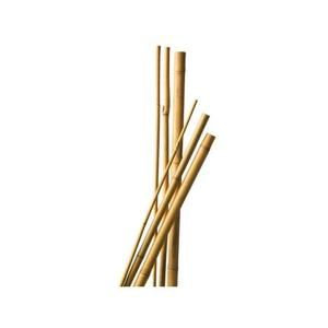 Tuteur en bambou naturel (L=50cm)