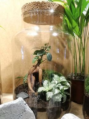 """Nouveau : notre terrarium """"Stonehenge's Garden"""" adopte un contenant 100% recyclé"""