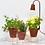Thumbnail: Calla Garden - Cotta - Lampe de croissance design