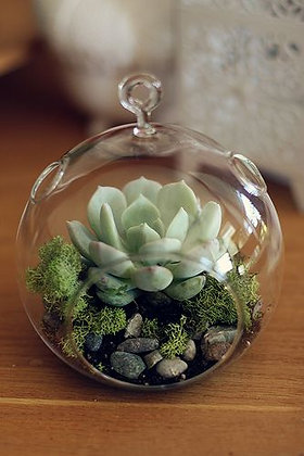 "Compo ""Air Plant"" - Special events"