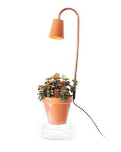Calla Garden - Cotta - Lampe de croissance design