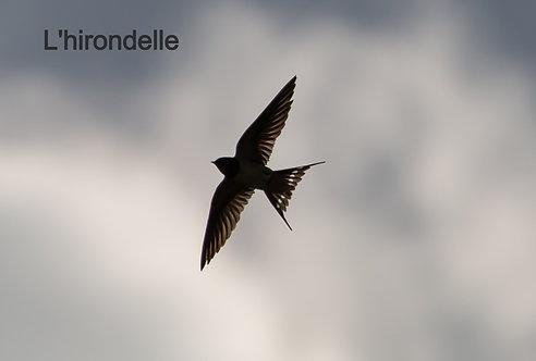 Song Title: L'hirondelle