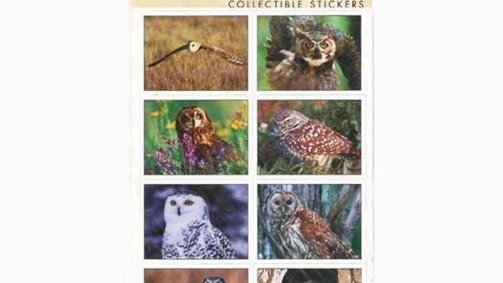 Sticker Sheet Owls North America