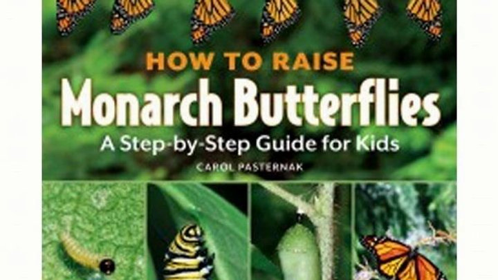 How to Raise Monarch Butterflies For Kids