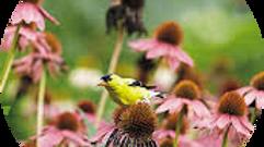 Tree Bird Wild Flower Suet 8 Lbs