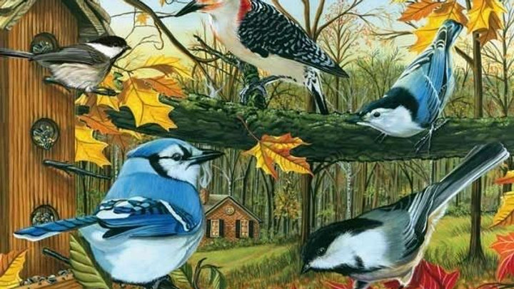 Backyard Bird Feeder Puzzle 1000 PIECE