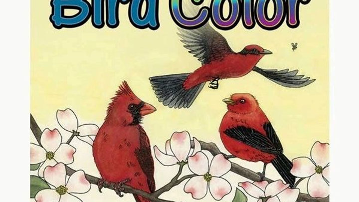 Children Bird Color Book