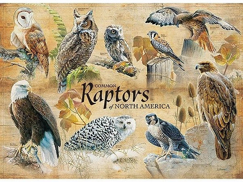 Common Raptors 1000 Piece Puzzle