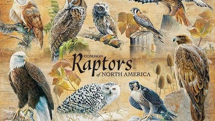 Common Raptors 1000 Piece Puzzle