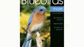 Enjoying Blue Birds More
