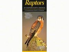 Raptors of North America Foldout