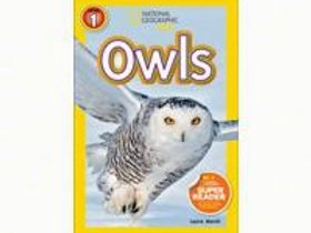 Owls Early Reader