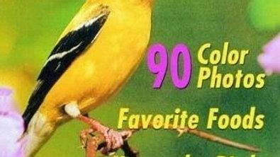 An Identification Guide to Common Backyard Birds