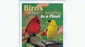 Flash Cards Birds North American