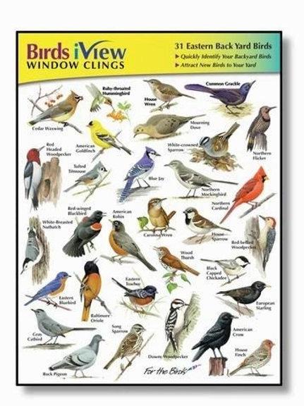 Birds iView Window Clings