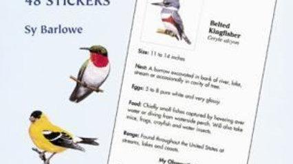 A Beginners Birdwatching Guide