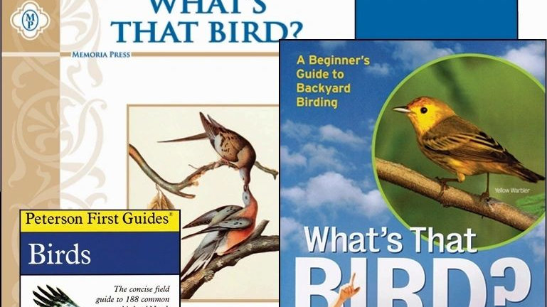 Whats that Bird Curriculum