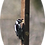 Thumbnail: Woodpecker Limb Feeder