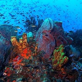 sponges-fish.jpg