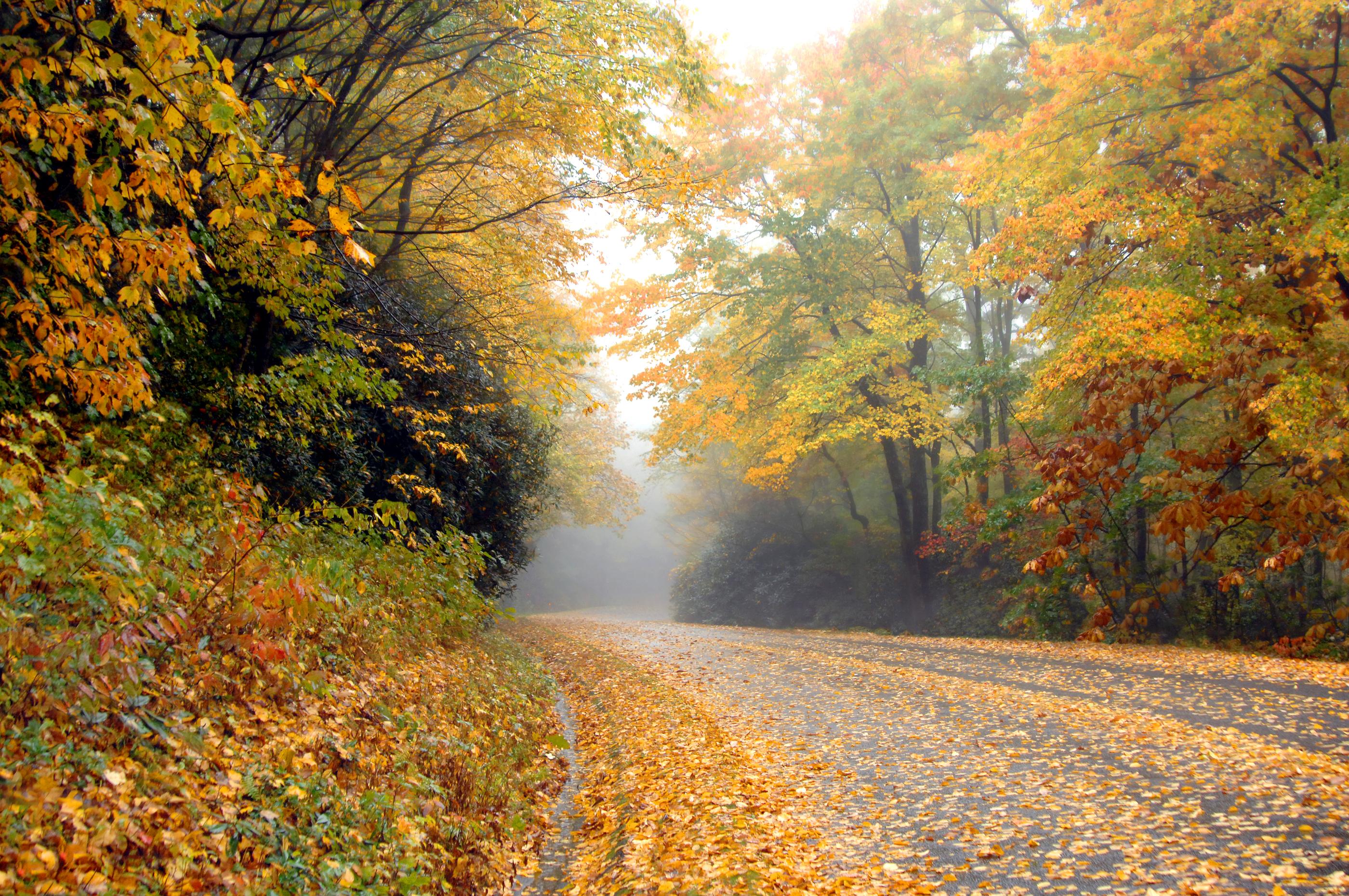 Along the Blue Ridge Parkway