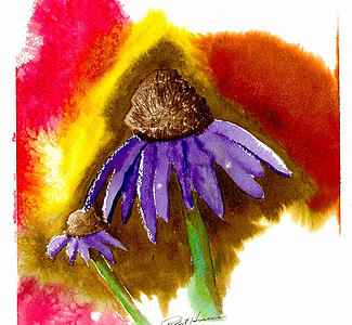 Cone Flower - Giclee' Fine Art Prints