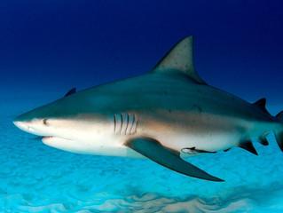 Kelly Slater em polêmica pelo abate de tubarões nas Ilhas Reunião