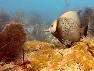 Dive Against Debris em Miami