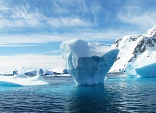 Pesquisas sísmicas propostas no Refúgio Ártico provavelmente causarão danos duradouros
