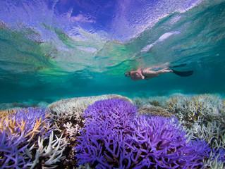 O último suspiro dos corais