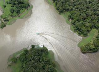 Dia da Amazônia - 05 de setembro