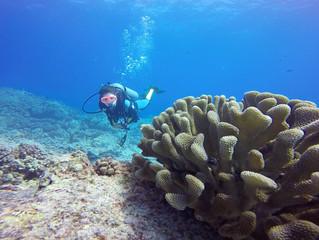 10 Coisas que você pode fazer para salvar os Oceanos
