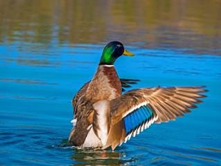 """A """"migração"""" de peixes através da ingestão de ovos por pássaros"""