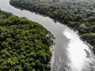 A ameaça aos mangues da Guanabara