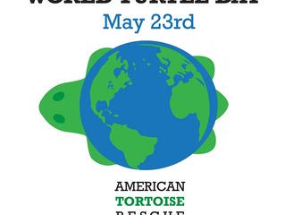 Dia Mundial da Tartaruga
